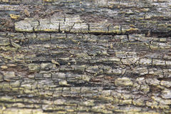 Nice texture royalty free stock images