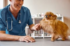 Nice to meet you, buddy! Cheerful middle aged vet holding dog`s paw and smiling while standing at veterinary clinic. Medicine concept. Pet care concept. Animal royalty free stock images