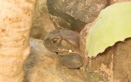 4 nice toad Στοκ εικόνα με δικαίωμα ελεύθερης χρήσης