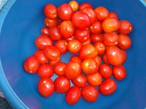 Nice tomato spread Royalty Free Stock Image