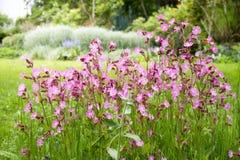 Nice trädgårdblommor Arkivfoto