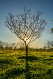 A nice tree in front of the sun royalty free stock images