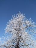 Nice tree under snow in a beautiful day of December stock photos