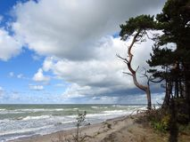 Trees and Baltic sea coast sunny day, Lithuania stock photography