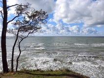 Trees and Baltic sea coast sunny day, Lithuania stock photo