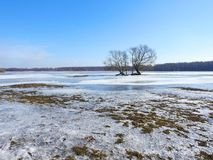 Beautiful trees in spring flood field, Lithuania Stock Photo