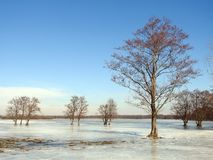 Beautiful trees in spring flood field, Lithuania Stock Photography