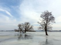 Beautiful trees in spring flood field, Lithuania Stock Image