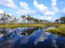 Beautiful small lake in Aukstumalos swamp, Lithuania royalty free stock photo