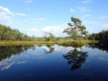 Beautiful small lake in Aukstumalos swamp, Lithuania Stock Photography