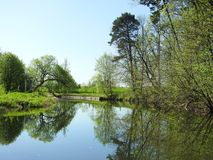 River Sysa and beautiful trees in spring, Lithuania Stock Photography