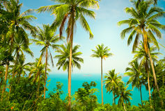 Nice tropical background Royalty Free Stock Photography