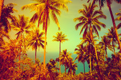 Nice tropical background Stock Image