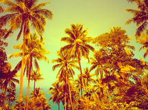 Nice tropical background Royalty Free Stock Image