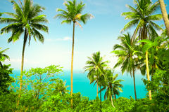 Nice tropical background Royalty Free Stock Images