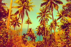 Nice tropical background Royalty Free Stock Photos