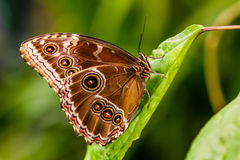 Nice tropical butterfly. Stock Photography