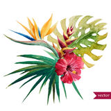 Nice tropical flowers Stock Photography