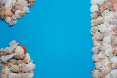 Nice Tropical Seashell Frame Collection Flat Lay stock images