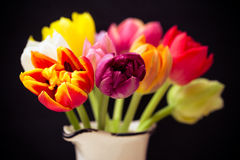 Nice tulips Royalty Free Stock Image