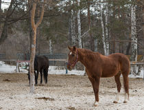 Nice two horse Royalty Free Stock Photos
