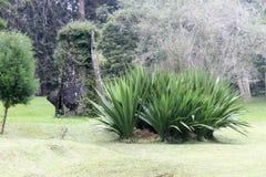 Nice växter i den Cibodas botaniska trädgården Arkivfoto