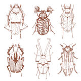Nice vector hand drawn beetles Stock Image