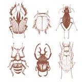 Nice vector hand drawn beetles Stock Photos