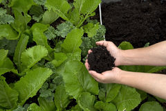 Nice vegetable and garden soil Stock Photography