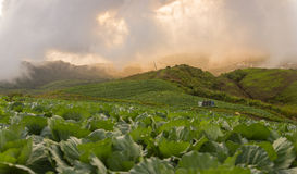 Nice view with cabbage foreground on Phu tab Berg Stock Photo