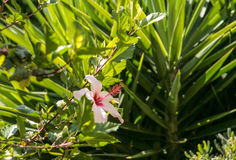 Nice view on flora from Rethymno, Crete, Greece Royalty Free Stock Images