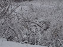 Nice view on the narrow walking way in autumn. In the evening, under the lamp, Nice view on the narrow walking way in autumn just beside the sea in Espoo Finland Royalty Free Stock Photos