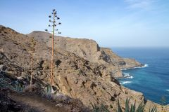 Nice view of north coast with ocean and mountains in La Gomera. An agave is standing on a hiking trail. This picture is taken near liitle village of Hermigua stock photos