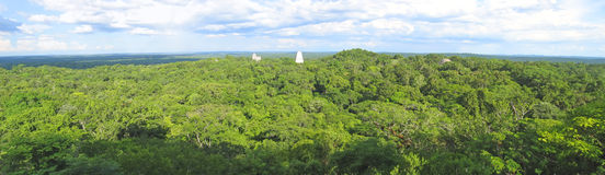 Nice view over the maya ruins. Nice view over the old maya ruins and the Peten jungle - Tikal - Guatemala - Panorama Royalty Free Stock Image