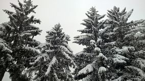 Nice view perspective the snow on trees. Categori of nature in perspective of trees with snow Royalty Free Stock Photo