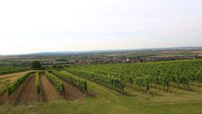 Nice vineyard plant with small village, agriculture, south moravia, Czech republic