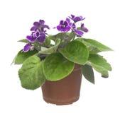 Nice violet flower Stock Image