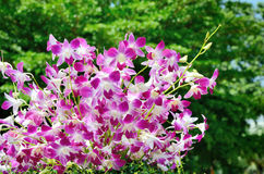 Nice violet orchid decoration Stock Image