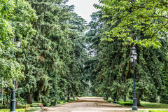 Nice walk with lush trees on the sides Stock Image