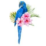 Nice watercolor blue parrots Stock Image