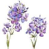 Nice watercolor flowers stock illustration