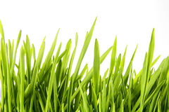Nice Wheat grass. On white isolated background Royalty Free Stock Images