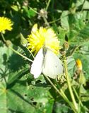 A nice white butterfly beyond the wood