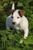Nice white dog in nature Royalty Free Stock Photography