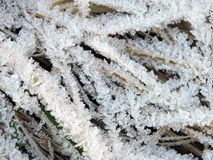 Beautiful frost on grass in winter Royalty Free Stock Photo