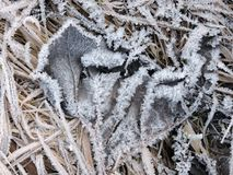 Beautiful frost on grass in winter Stock Photos