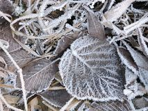 Beautiful frost on leaves and grass in winter Royalty Free Stock Photo