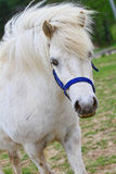 Nice white horse. On a meadow Stock Photography
