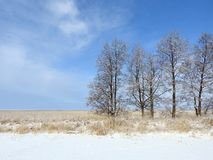 Beautiful snowy trees in field, Lithuania Royalty Free Stock Images