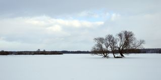 Beautiful snowy trees in field, Lithuania Royalty Free Stock Image